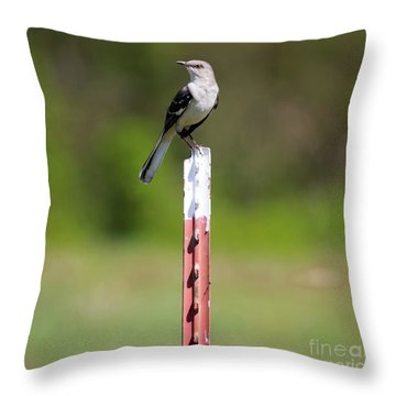 Throw Pillow featuring the photograph Northern Mockingbird Posing  by Ricky L Jones