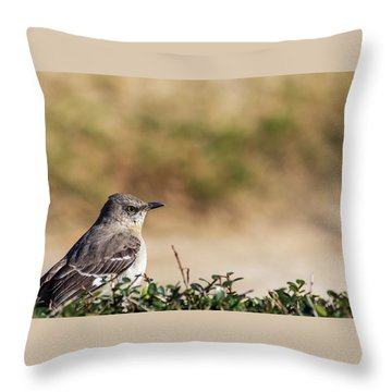 Northern Mockingbird Sitting On Top Of A Hedge Throw Pillow