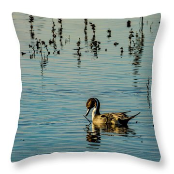 Northern Pintail At The Wetlands Throw Pillow
