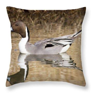 Northern Pintail Drake Throw Pillow