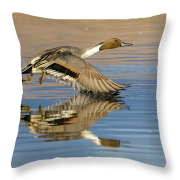 Northern Pintail With Reflection Throw Pillow