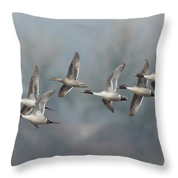 Throw Pillow featuring the photograph Northern Pintails In Flight by Angie Vogel