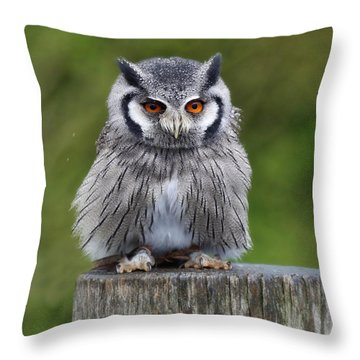 Northern White Faced Owl Throw Pillow