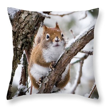 Nosy Neighbor Throw Pillow
