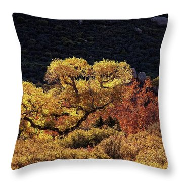 Throw Pillow featuring the photograph November In Arizona by Ron Chilston