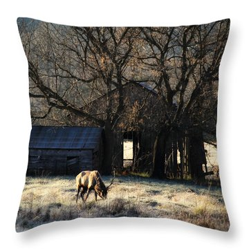 Throw Pillow featuring the photograph November Sunrise by Michael Dougherty