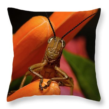 Now Lets Pray 666. Throw Pillow by Kevin Chippindall