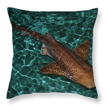 Nurse Shark Throw Pillow