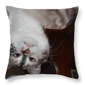 Nutball Throw Pillow by Kristin Elmquist