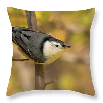 Nuthatch In Fall Throw Pillow