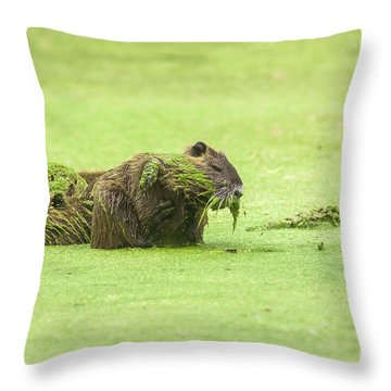 Throw Pillow featuring the photograph Nutria In A Pesto Sauce by Robert Frederick