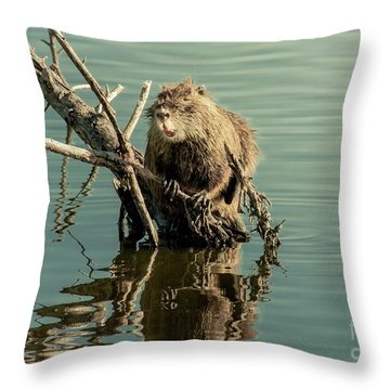 Nutria On Stick-up Throw Pillow by Robert Frederick