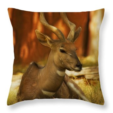 Nyala 3 Throw Pillow