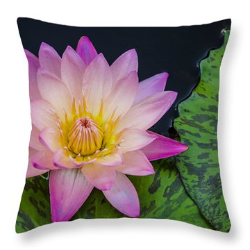 Nymphaea Hot Pink Water Lily Throw Pillow