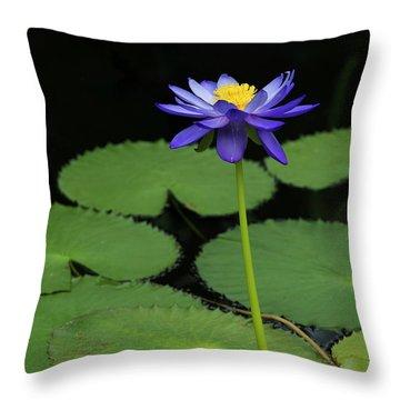 Nymphaea Kews Stowaway Throw Pillow