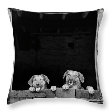 Nz Huntaways, Forever Happy And Nosey. Working Sheep Dogs Throw Pillow