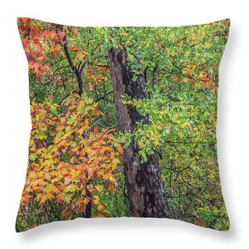 Oak Hickory Woodland Throw Pillow by Tim Fitzharris