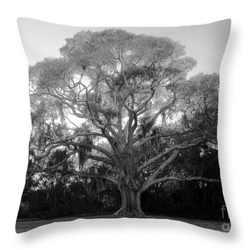 Oak Tree Throw Pillow by David Lee Thompson