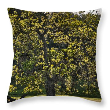 Oak Tree New Green Leaves Throw Pillow