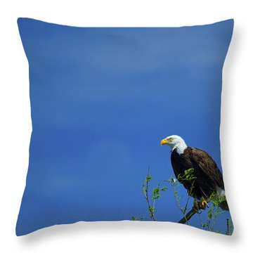 Observe And Report Throw Pillow