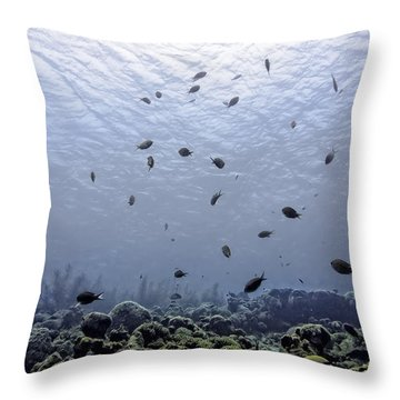 Throw Pillow featuring the photograph Ocean Light by Perla Copernik