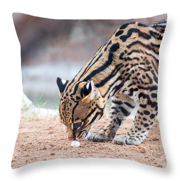 Ocelot And Egg Throw Pillow