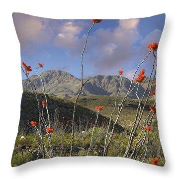 Ocotillo Fouquieria Splendens, Big Bend Throw Pillow