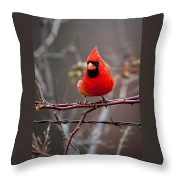Of Barbs And Thorns Throw Pillow