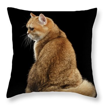 Throw Pillow featuring the photograph offended British cat Golden color by Sergey Taran