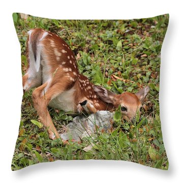 Oh Deer Little Fawn Throw Pillow by Debbie Stahre