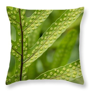 Throw Pillow featuring the photograph Oh Fern by Christina Lihani