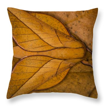 Oiticella Convergens Moth Throw Pillow by Gabor Pozsgai