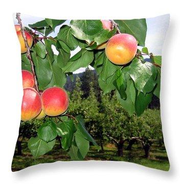 Okanagan Apricots Throw Pillow by Will Borden