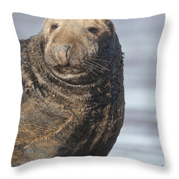 Old Atlantic Grey Seal On The Beach Throw Pillow