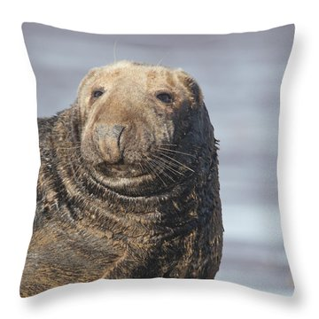 Old Atlantic Grey Seal On The Beach Throw Pillow