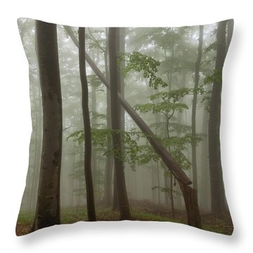Old Beech Forest Throw Pillow by Evgeni Dinev