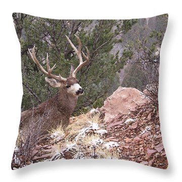 Old Buck Throw Pillow