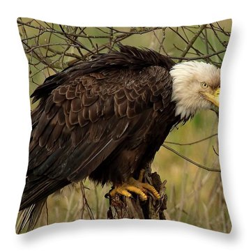 Old Eagle Throw Pillow
