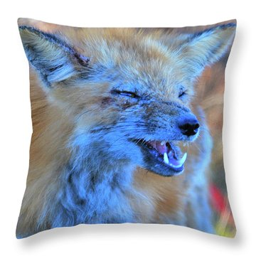 Throw Pillow featuring the photograph Old Fox by Debbie Stahre