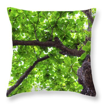 Throw Pillow featuring the photograph Old Green Tree by Jingjits Photography