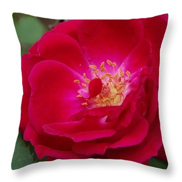 Old Homestead Rose Throw Pillow