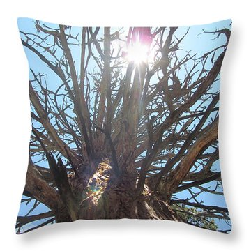 Old Juniper Throw Pillow