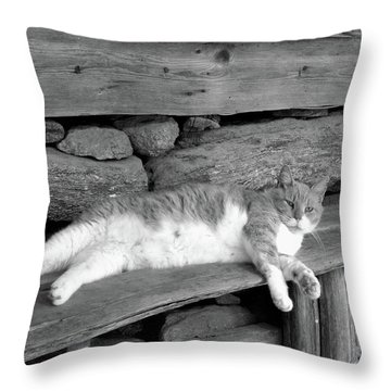 Throw Pillow featuring the photograph Old Mill Cat by Sandi OReilly