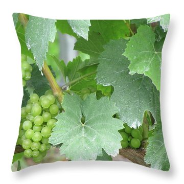 Old Mission Jewels Throw Pillow by Kelly Mezzapelle