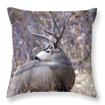 Old Orchard Throw Pillow