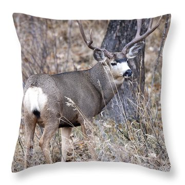 Old Orchard II Throw Pillow