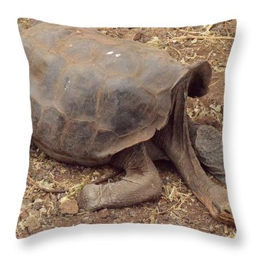 Old Tortoise Throw Pillow by Will Burlingham
