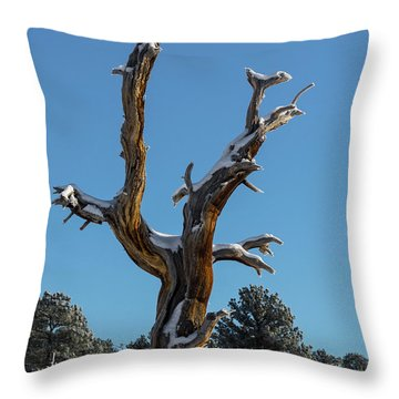 Old Tree - 9167 Throw Pillow