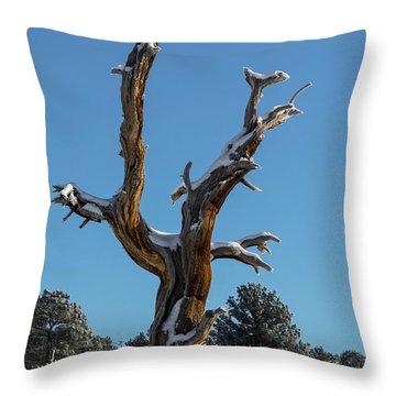 Old Tree - 9167 Throw Pillow