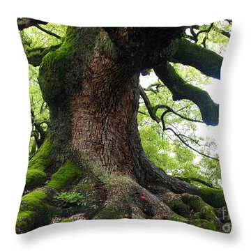 Old Tree In Kyoto Throw Pillow by Carol Groenen